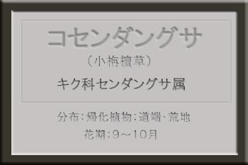 *コセンダングサ名札_edited-1.jpg