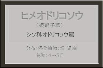 *ヒメオドリコソウ名札_edited-1.jpg