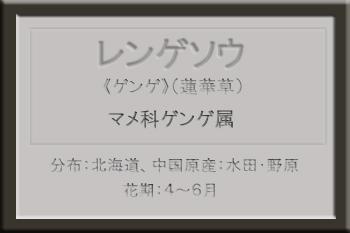 *レンゲソウ名札_edited-1.jpg