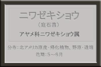 ・・*ニワゼキショウ名札_edited-1.jpg