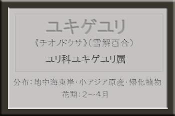 ・*ユキゲユリ名札_edited-1.jpg