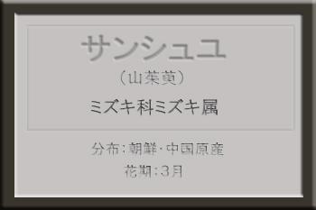*サンシュユ名札_edited-1.jpg