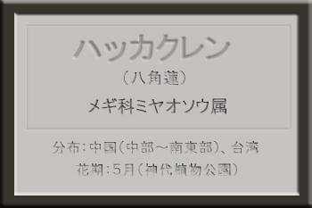 *ハッカクレン名札_edited-1.jpg