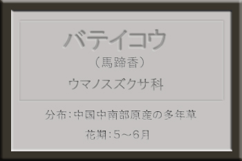 *バテイコウ名札_edited-1.jpg