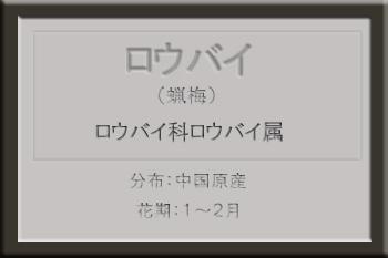 *ロウバイ名札_edited-1.jpg